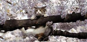 Back Stalder Cat