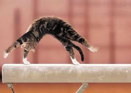 Cat Spring