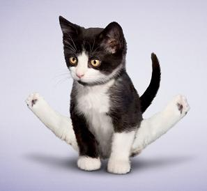 Clear Straddle Kitty