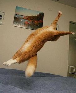 Tumbling Cat