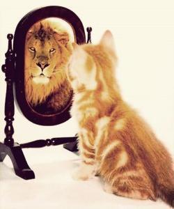 Confidence Cat